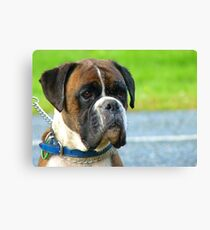 Beautiful Jowls! - Boxer Dog - NZ Canvas Print