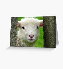 Hi Bubbler's - Lamb - NZ - Southland Greeting Card