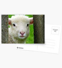 Hi Bubbler's - Lamb - NZ - Southland Postcards