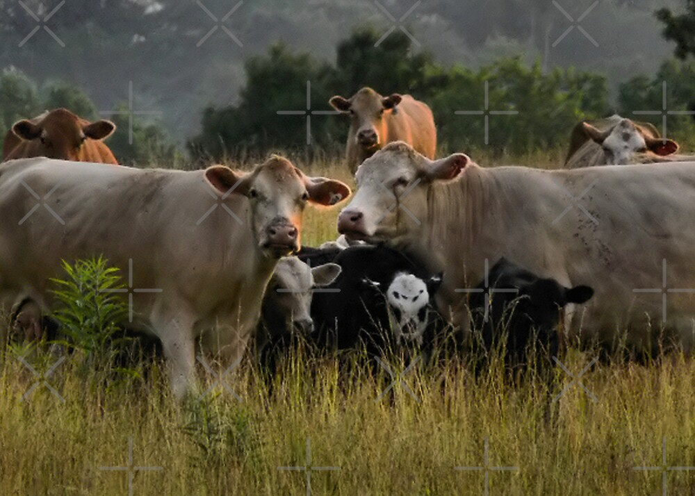 Freaky Cow II by Rachel Leigh