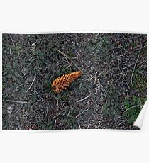 Lonely Pinecone Poster
