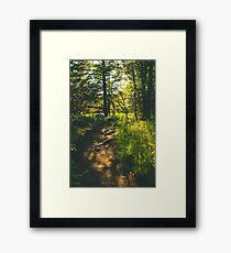 The Hiking Path Into The Wild Framed Print