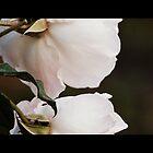 Dreamy by Lozzar Flowers & Art