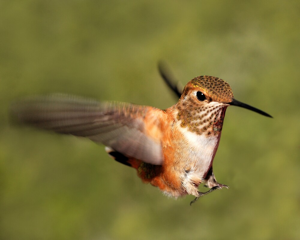 Landing by Ken  Aitchison