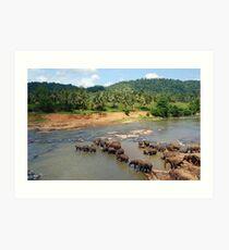Pinnewala Elephant Orphanage. Sri Lanka. Art Print