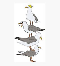 Stack of Seagulls Photographic Print