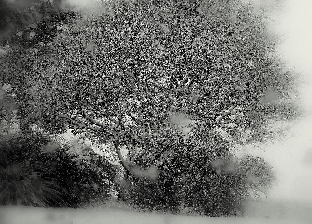 TREE OF SNOW by kevsphotos2008