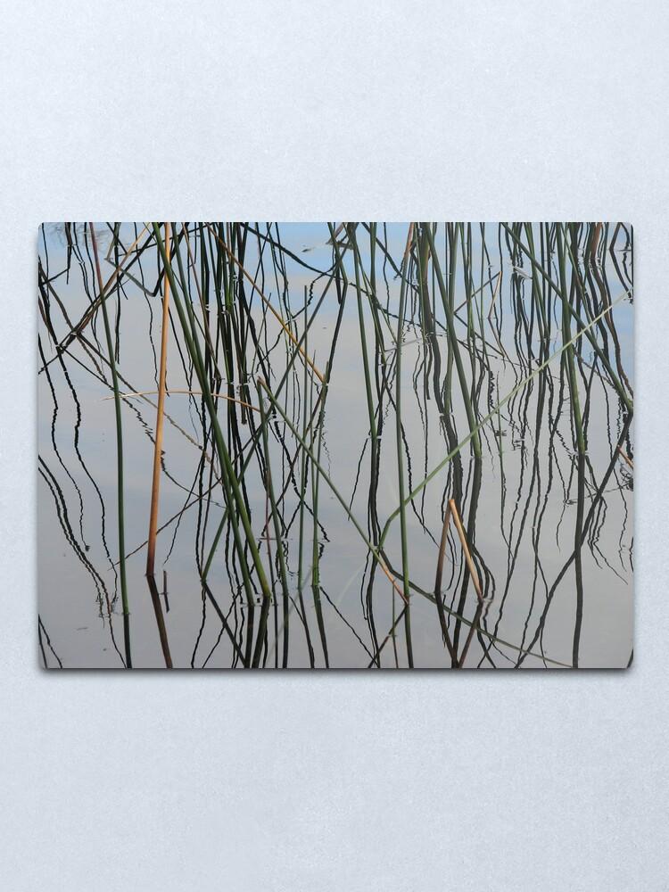 Alternate view of Wobbly Reeds Metal Print
