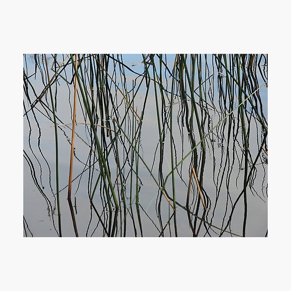 Wobbly Reeds Photographic Print
