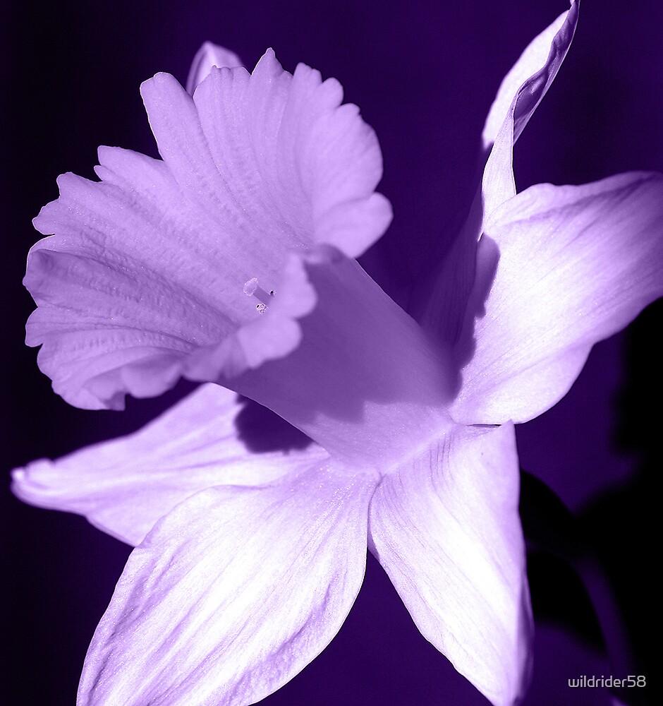 purple by wildrider58