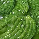 Grüne Hosta im Regen mit Tropfen by Martina Cross