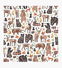 Woodland Animals Photographic Print