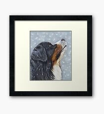 Blissful Blue - Bernese Mountain Dog Catching Snowflakes Framed Print