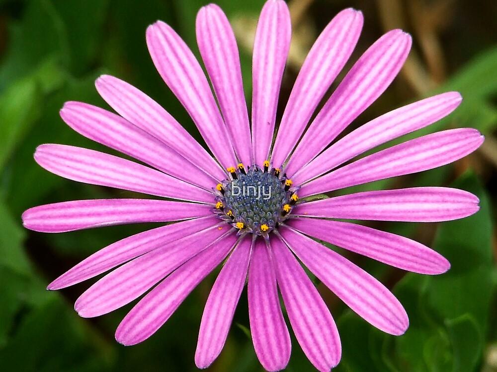 Purple Petals by binjy