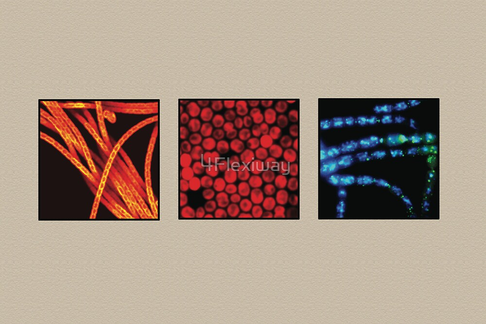 Photosynthetic bacteria compilation by 4Flexiway