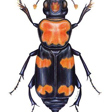 American Burying Beetle by edenart