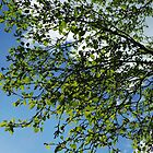 April view looking up in my garden by Themis