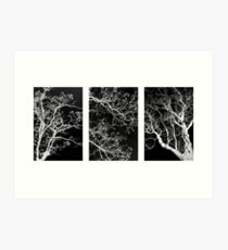 Black and White Tree Triptych Art Print