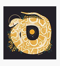 Familiar - Burmese Python Photographic Print