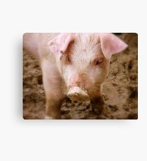 Oh No Mum.. I Didn't Have Any Curds And Whey This Morning!! - Baby Piglet - NZ Canvas Print