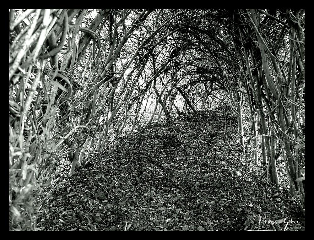 Where the Fairies Go by YamiChi