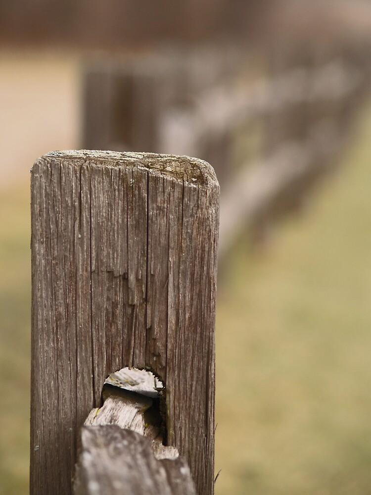 Fence by Daniela Reynoso Orozco