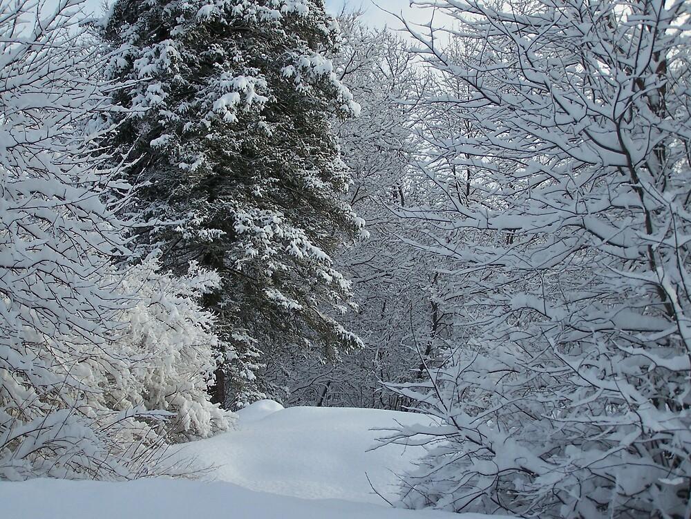Snow Path by Gene Cyr