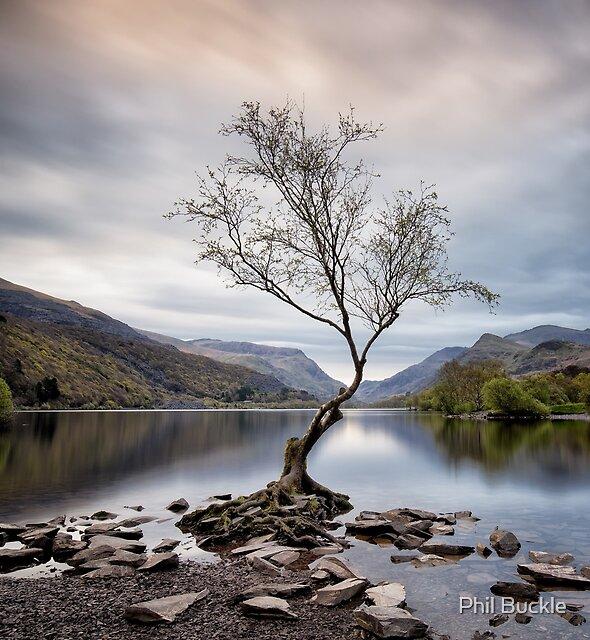 Llanberis Lone Tree by Phil Buckle
