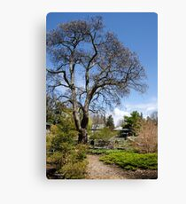 Botanical Garden Landscape Canvas Print