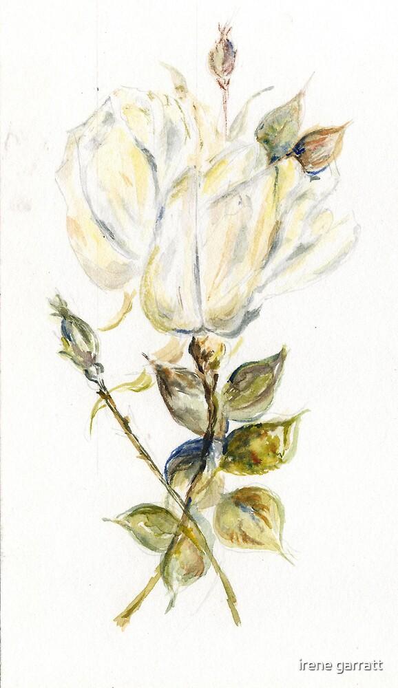 Tulip time by irene garratt
