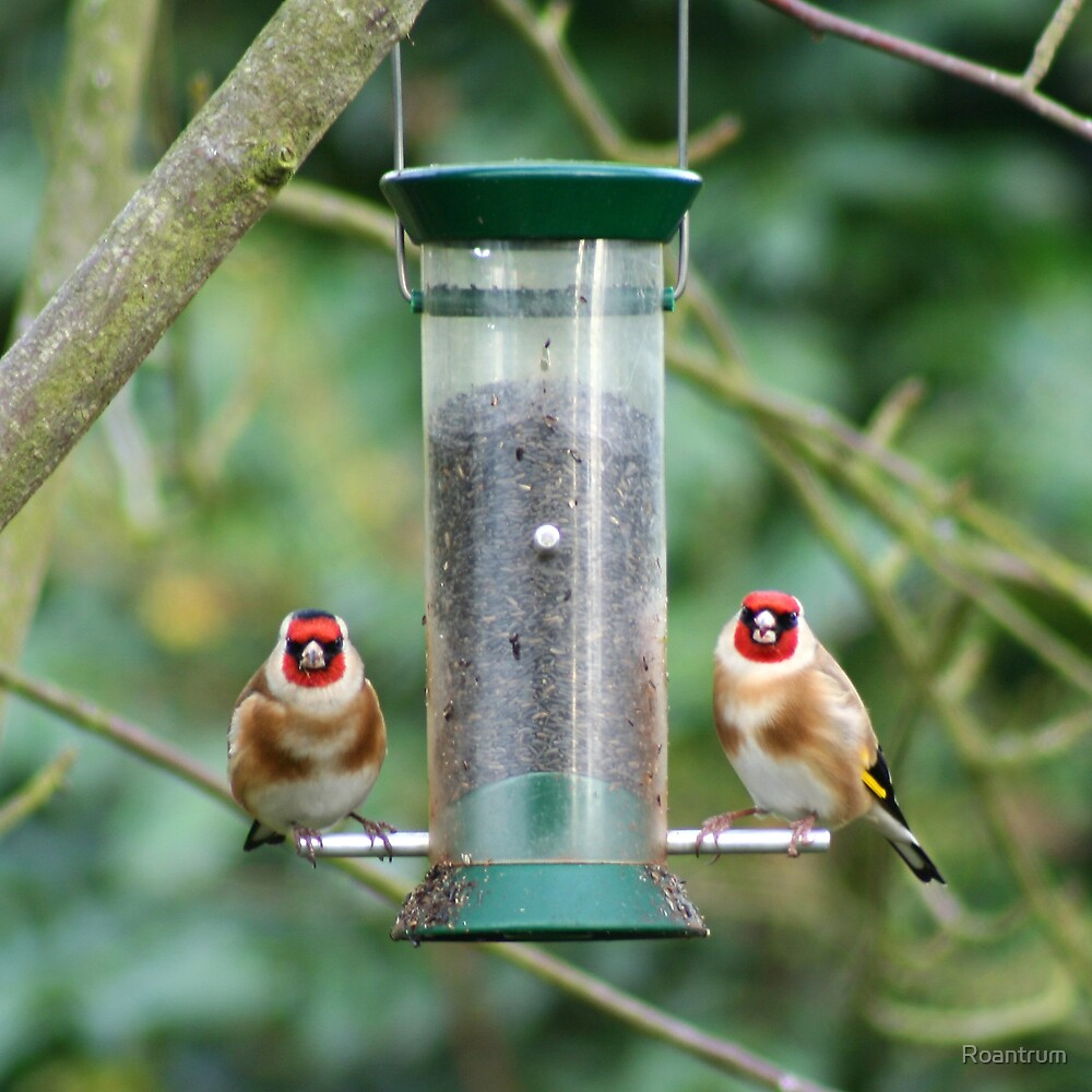 A Charm of Goldfinches by Roantrum