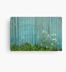 natural wild flowers outdoors blue metal fence texture Canvas Print