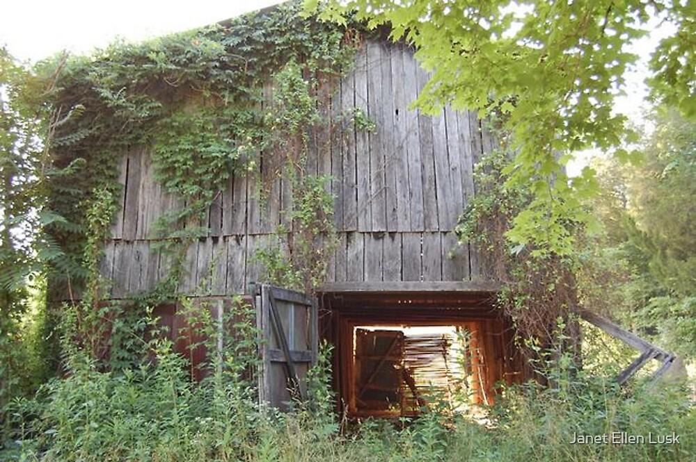 Abandoned Tobacco Barn in Kentucky by Janet Ellen Lusk