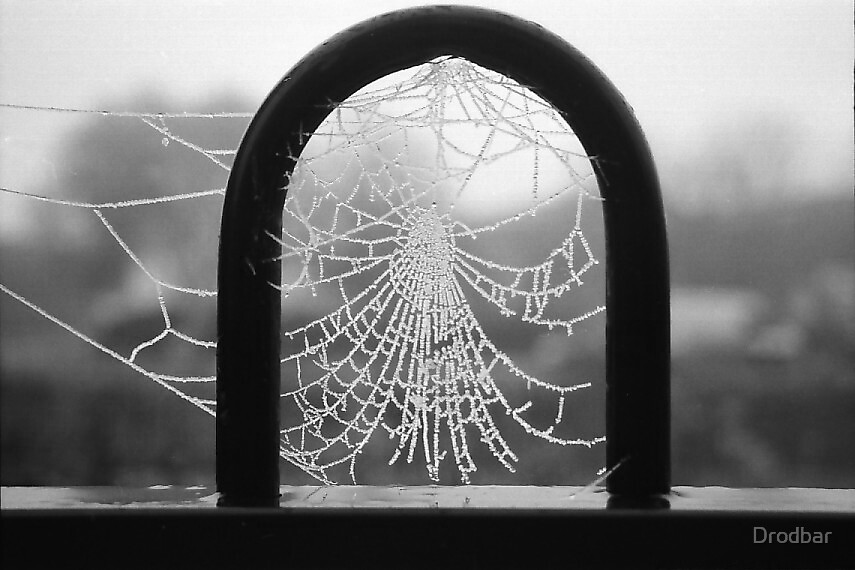 Frosty December morning on the Industrial Estate and a frozen web by Drodbar
