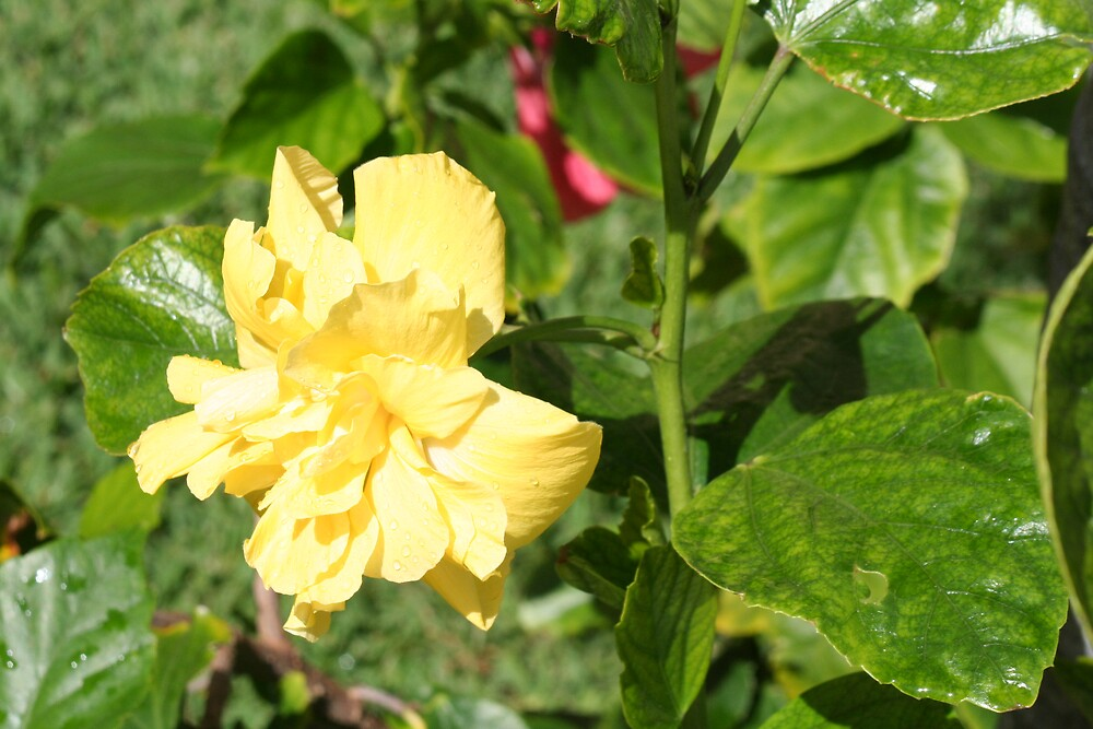 flower2 by bgsq2