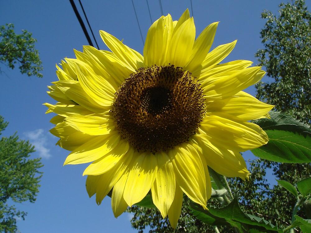 flower 3 by bgsq2