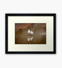 Gulls reflection, NSW Australia Framed Print