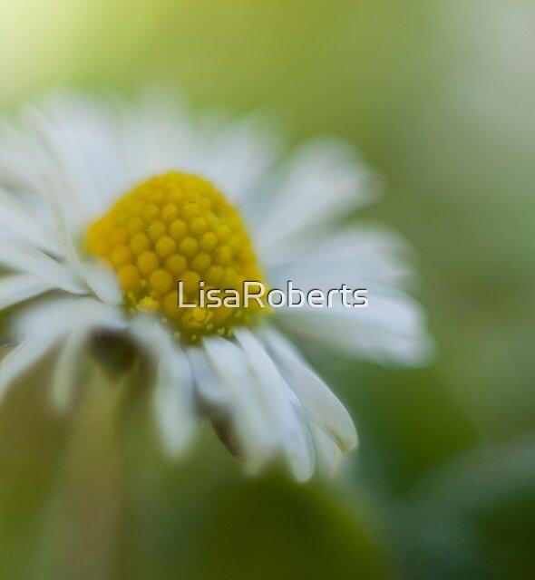 Hazy Daisy by LisaRoberts