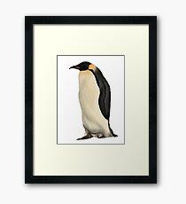 Penguin. Framed Print
