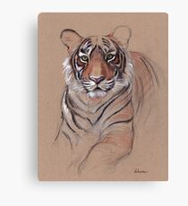 UNFINISHED BUSINESS - Original Tiger Drawing - Mixed Media (acrylic paint & pencil) Canvas Print