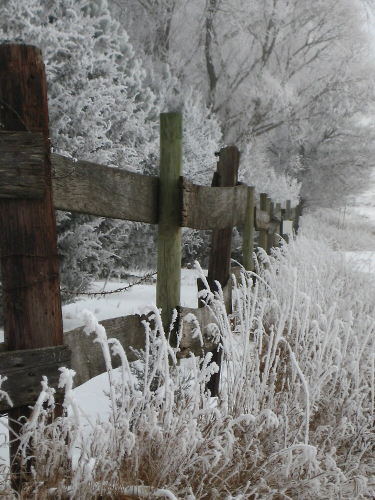 Frost Along the Fenceline by kali424
