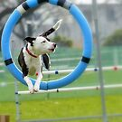 Hey...I Can Fly Through Hoops!!! - Flygility - NZ by AndreaEL