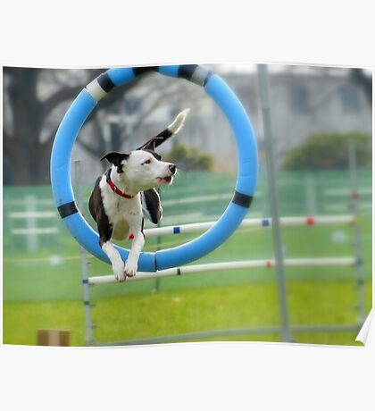 Hey...I Can Fly Through Hoops!!! - Flygility - NZ Poster