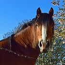 Equus. by Michael Haslam