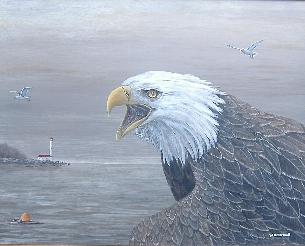 Harbour Master-Bald Eagle by bullerwell