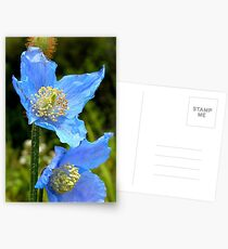 The Colour of Sky! - Himalayan Poppy - NZ Postcards