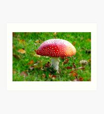 Magical Hallucinations - Amanita Muscaria - Fungi - NZ Art Print