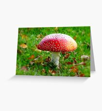 Magical Hallucinations - Amanita Muscaria - Fungi - NZ Greeting Card