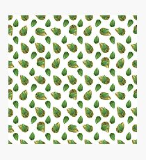 Leaves Motif Nature Pattern Photographic Print
