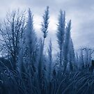 Frozen Dreams by emilypigou
